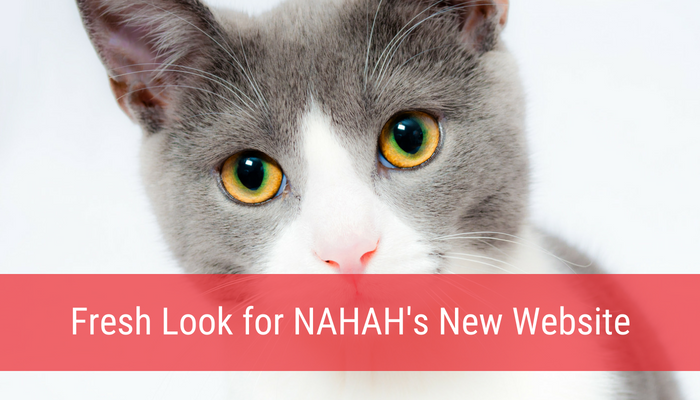 Fresh Look for North Andover Animal Hospital's New Website
